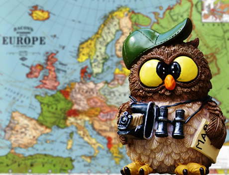 sightseeing owl