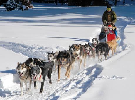 Dog Sled Sled Hockey Uk